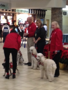 Airport Service Dogs